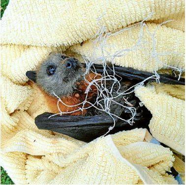 Netting : A Death Trap