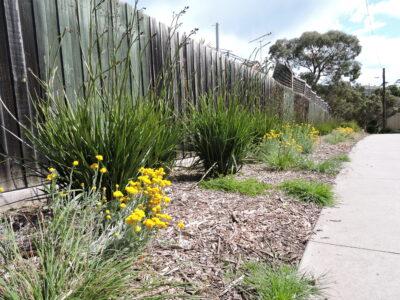Strattons Lane Planting 2021