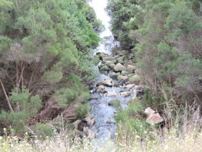 Tanti Creek
